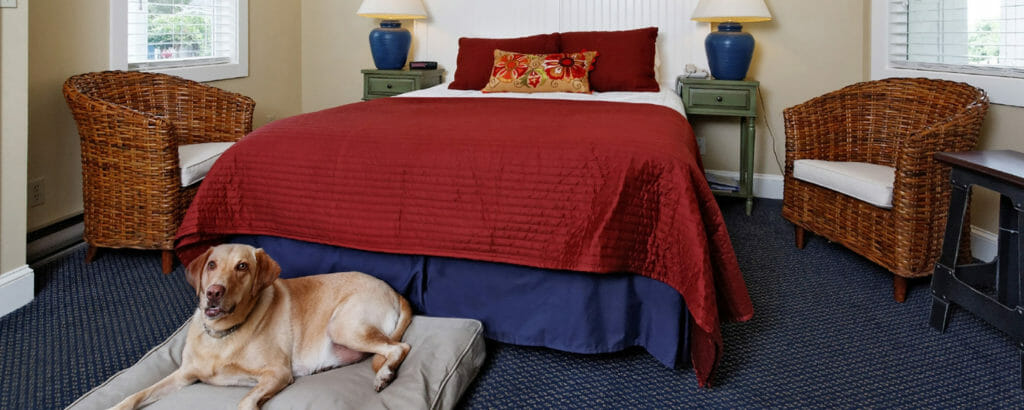 pet friendly hotel rockland maine