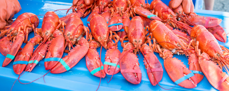 things to know about maine lobster festival