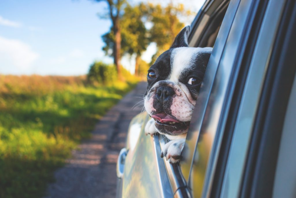 pet-friendly things to do rockland, maine