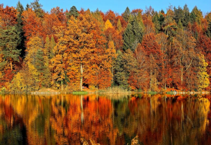 best places for autumn leaves in Camden Maine
