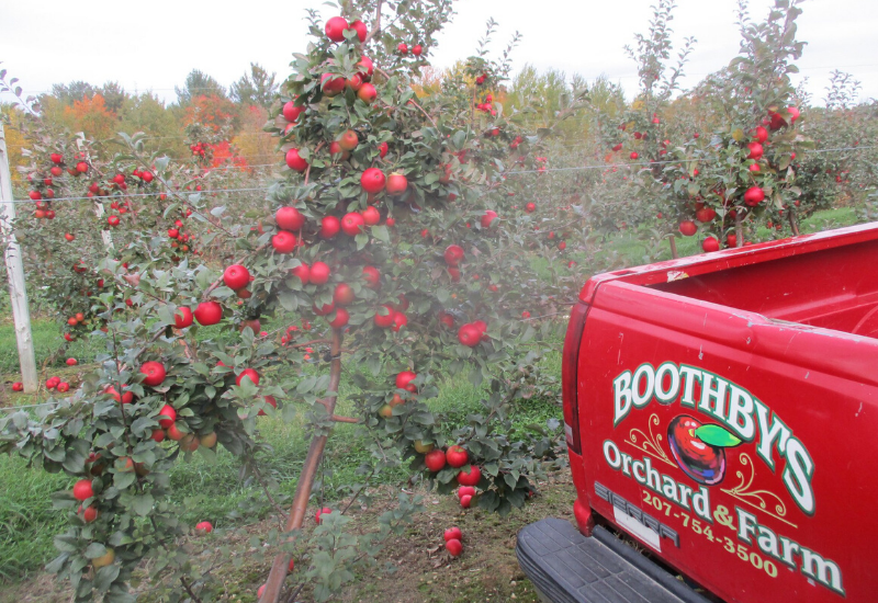 Boothby Orchard and Farm Winery - one of the Best Rockland Maine Wineries and Vineyards in MidCoast Maine